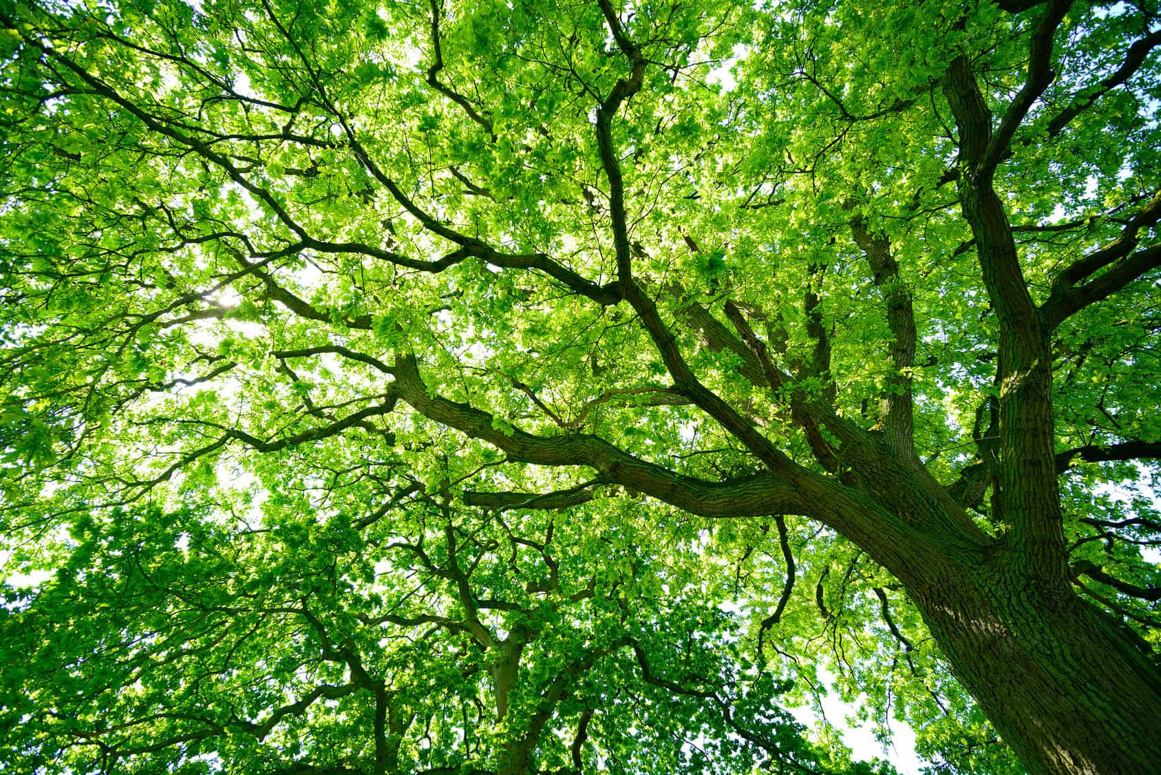 wycinka drzew gliwice